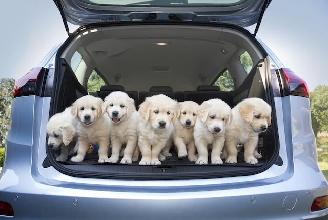 Hunde im Auto - Opel denkt an Vierbeiner